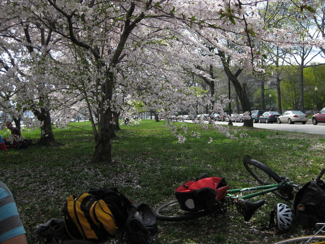 Bikes and blossoms